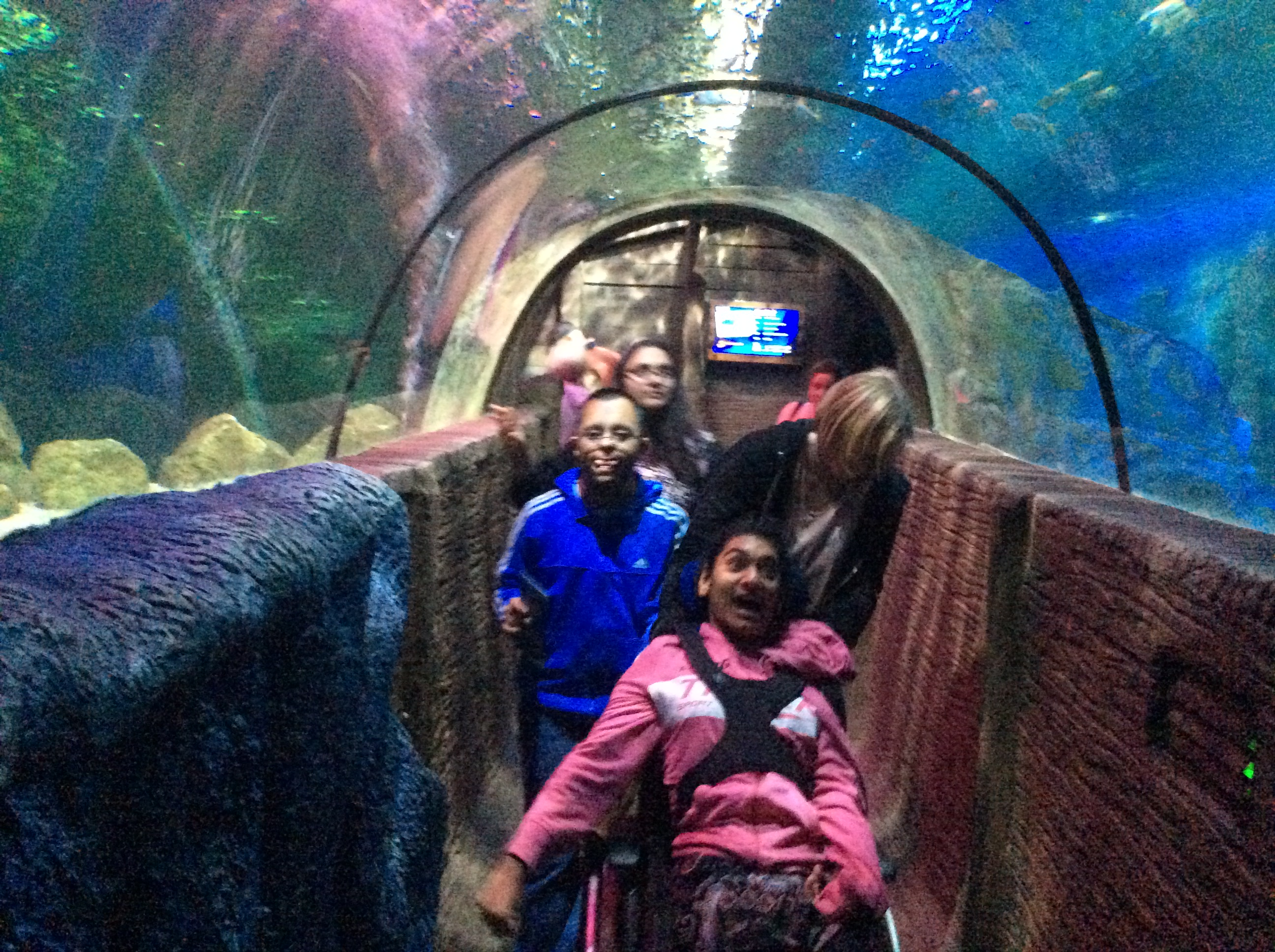 TG1 Summer Trip - The Sealife Centre